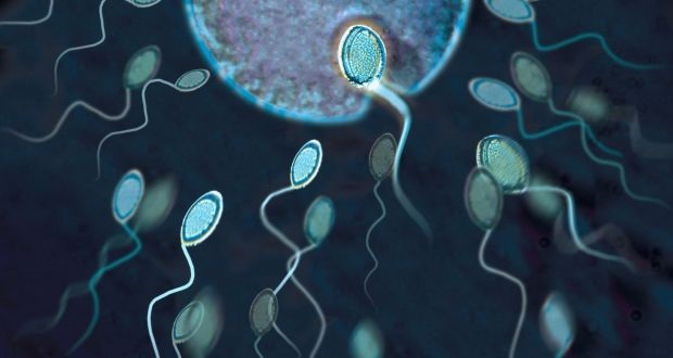 Factors That Affect The Sperm Health
